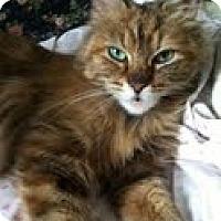 Adopt A Pet :: Rosario - Chicago, IL