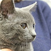 Adopt A Pet :: Sabine - Santa Monica, CA