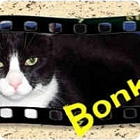 Adopt A Pet :: Bonkers - Jacksonville, FL