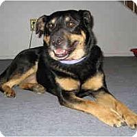 Adopt A Pet :: Mocha - Scottsdale, AZ