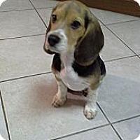 Adopt A Pet :: Otis - eastlake, OH