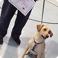 Adopt A Pet :: Buster - Georgetown, KY