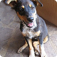 Adopt A Pet :: Lia - Santa Fe, NM