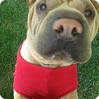 Adopt A Pet :: Jasmine - pending - Mira Loma, CA