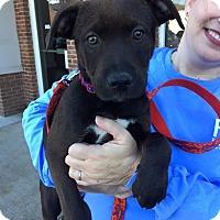Adopt A Pet :: Max - Knoxville, TN