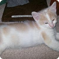 Adopt A Pet :: Spot - Irvine, CA