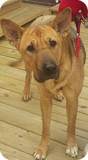 German Shepherd Dog/Shar Pei Mix Dog for adoption in New Philadelphia, Ohio - Tia