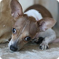 Adopt A Pet :: Maybelle - Canoga Park, CA
