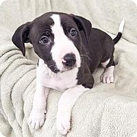 Adopt A Pet :: Holly Holm - Sacramento, CA