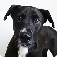 Adopt A Pet :: Oscar - Wilmington, DE
