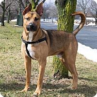 Adopt A Pet :: Decken - Livonia, MI