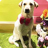 Adopt A Pet :: Highway - Castro Valley, CA