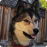 Adopt A Pet :: Timber - Kettle Falls, WA