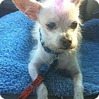 Adopt A Pet :: Yuki - Temecula, CA