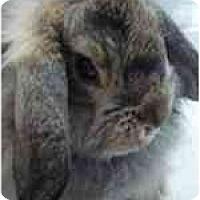 Adopt A Pet :: Wink - Williston, FL
