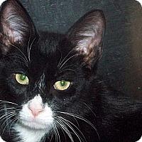 Adopt A Pet :: Big Bleu - Secaucus, NJ