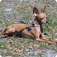 Adopt A Pet :: Fancy - Minneola, FL
