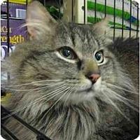 Adopt A Pet :: Winston - Jenkintown, PA