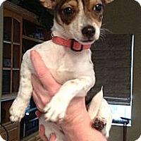 Adopt A Pet :: Maya - Santa Monica, CA