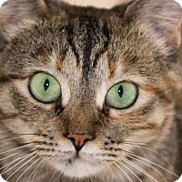 Adopt A Pet :: Quinn - Monroe, GA