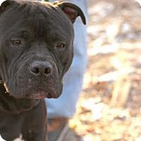Adopt A Pet :: Deisel - Tinton Falls, NJ