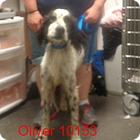 Adopt A Pet :: Oliver - baltimore, MD