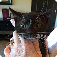 Adopt A Pet :: PENNY - Hamilton, NJ