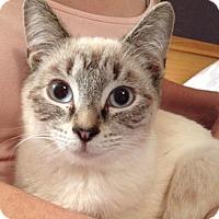 Adopt A Pet :: Markiss - North Highlands, CA