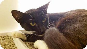 Domestic Shorthair Cat for adoption in Cumming, Georgia - Ruthie