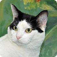 Adopt A Pet :: Marley - Englewood, FL