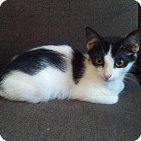 Adopt A Pet :: Zulu - Seminole, FL