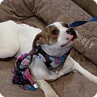 Adopt A Pet :: Amie - Yakima, WA