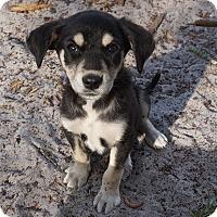 Adopt A Pet :: Tina - Oviedo, FL
