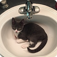 Adopt A Pet :: Thunder - New Braunfels, TX
