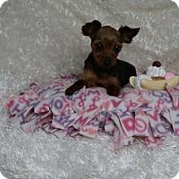 Adopt A Pet :: Lola - Sioux Falls, SD