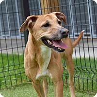 Adopt A Pet :: Nikki 478-15 - Cumming, GA