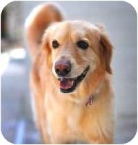 Golden Retriever Mix Dog for adoption in Scottsdale, Arizona - Alexa