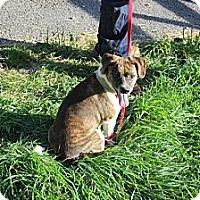 Adopt A Pet :: Clark - Minneapolis, MN