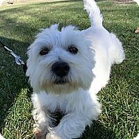 Adopt A Pet :: Brodie - GARRETT, IN