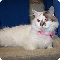 Adopt A Pet :: Glo - Colorado Springs, CO
