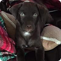 Adopt A Pet :: Conor - Marlton, NJ