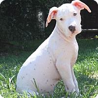 Adopt A Pet :: Bordentown NJ - CATELYN - New Jersey, NJ