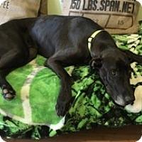 Adopt A Pet :: Zeus - Stevens Point, WI