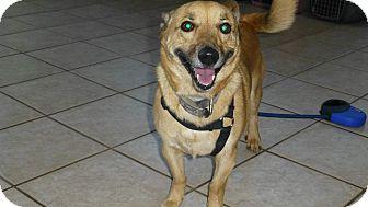 Corgi/Terrier (Unknown Type, Medium) Mix Dog for adoption in Wyanet, Illinois - Benjamin