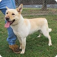 Adopt A Pet :: Ben - Reeds Spring, MO