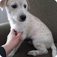 Adopt A Pet :: Nanoon - Hainesville, IL