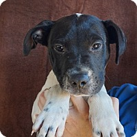 Adopt A Pet :: Ellie - Oviedo, FL