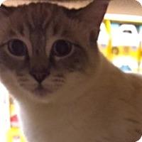 Adopt A Pet :: Adam - LaJolla, CA