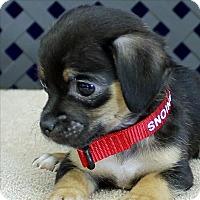 Adopt A Pet :: Mickey - Fort Davis, TX