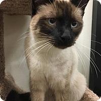 Adopt A Pet :: Mozart - Colonial Heights, VA